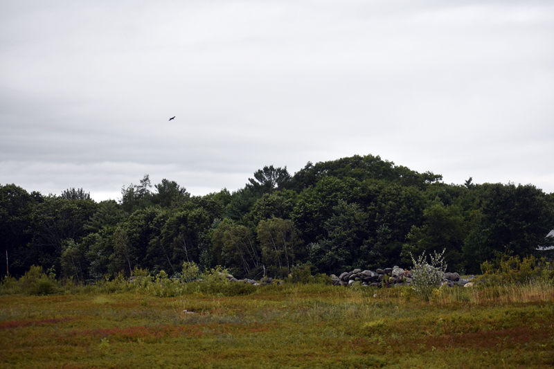 Waldoboro may forgo any future lease of its Quarry Hill blueberry fields and instead allow the public to pick blueberries there. (Alexander Violo photo)