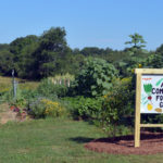Alna Community Foodbank Garden Thriving, Thanks to Volunteers