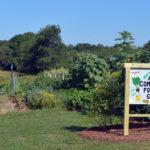 Alna Community Foodbank Garden Thriving, Thanks to Volunteers
