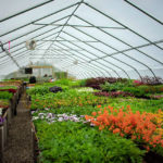 Gardens' Annual Lecture Moves Online