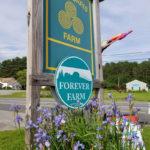 Craft Fair at Morris Farm