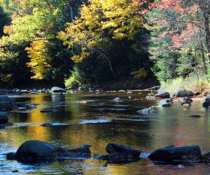 The Whitefield Salmon Preserve now includes 1.7 miles of protected riverfront on the Sheepscot River which support Atlantic salmon habitat, filter water, and store carbon to slow climate change. (Photo courtesy Tim Libby)