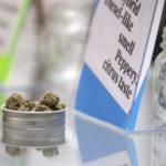 Bremen Cannabis Caregivers Branch Out to Damariscotta Storefront