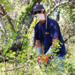 Coastal Rivers Removes Invasive Vines