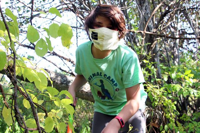 Volunteer Natalie Emmons uses loppers to cut bittersweet vines. (Photo courtesy Kris Christine)