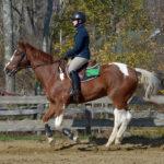 Midcoast Equestrian Teams Ride to Victory