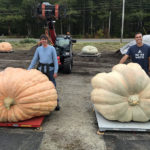 Giant Pumpkin Weigh-Off a Quiet Affair