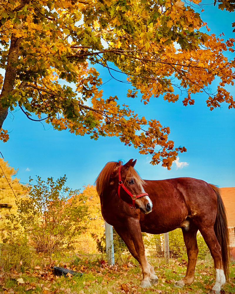 Brooke Alley, of Wiscasset, won the October #LCNme365 photo contest with this picture of her horse, Camelot. Alley will receive a $50 gift certificate to the Damariscotta River Grill courtesy of Newcastle Realty, the sponsor of the October contest.