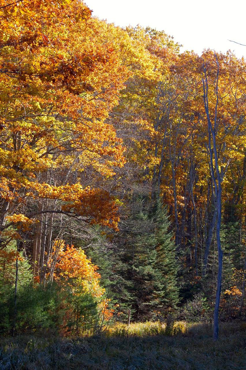 Hunters might acquire approval from the Boothbay Region Land Trust to hunt on its preserves.