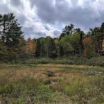 Conservancy Accepts Land Donation in Newcastle