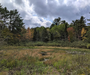 Wetlands on the Alna property donated by Roland Barth.