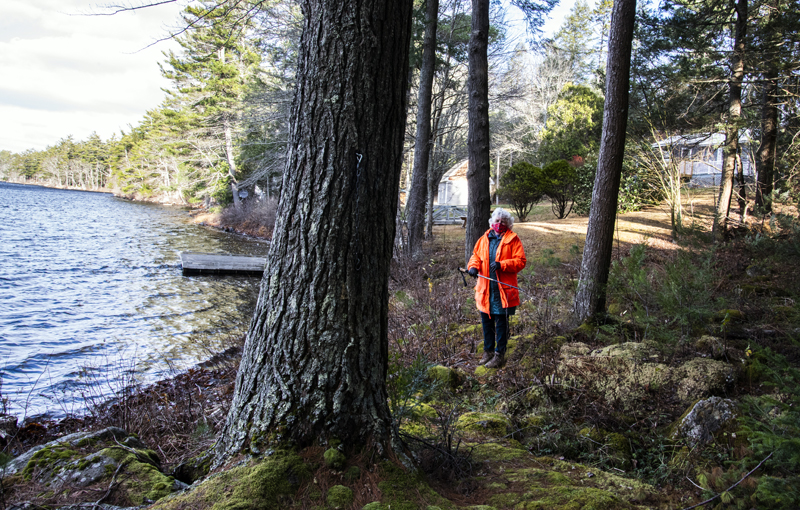 Mary Berger stands within the boundaries of the Weston Memorial Spring property in Bremen on Nov. 18. The Bremen Conservation Commission says the strip of town-owned land serves as a natural buffer that filters stormwater runoff from adjacent properties into Biscay Pond. (Bisi Cameron Yee photo)