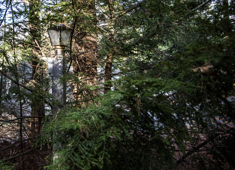 """An overgrown lamppost stands near the Weston Memorial Spring in Bremen on Nov. 18. The property was donated to the town in 1926 """"so that said spring and land surrounding and leading to it may always be open and free to the use of the public,"""" according to the deed. (Bisi Cameron Yee photo)"""