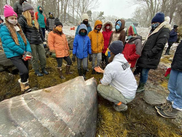 Bremen students learn about a basking shark from a scientist with the Maine Department of Marine Resources. (Photo courtesy Liz Mcgregor)