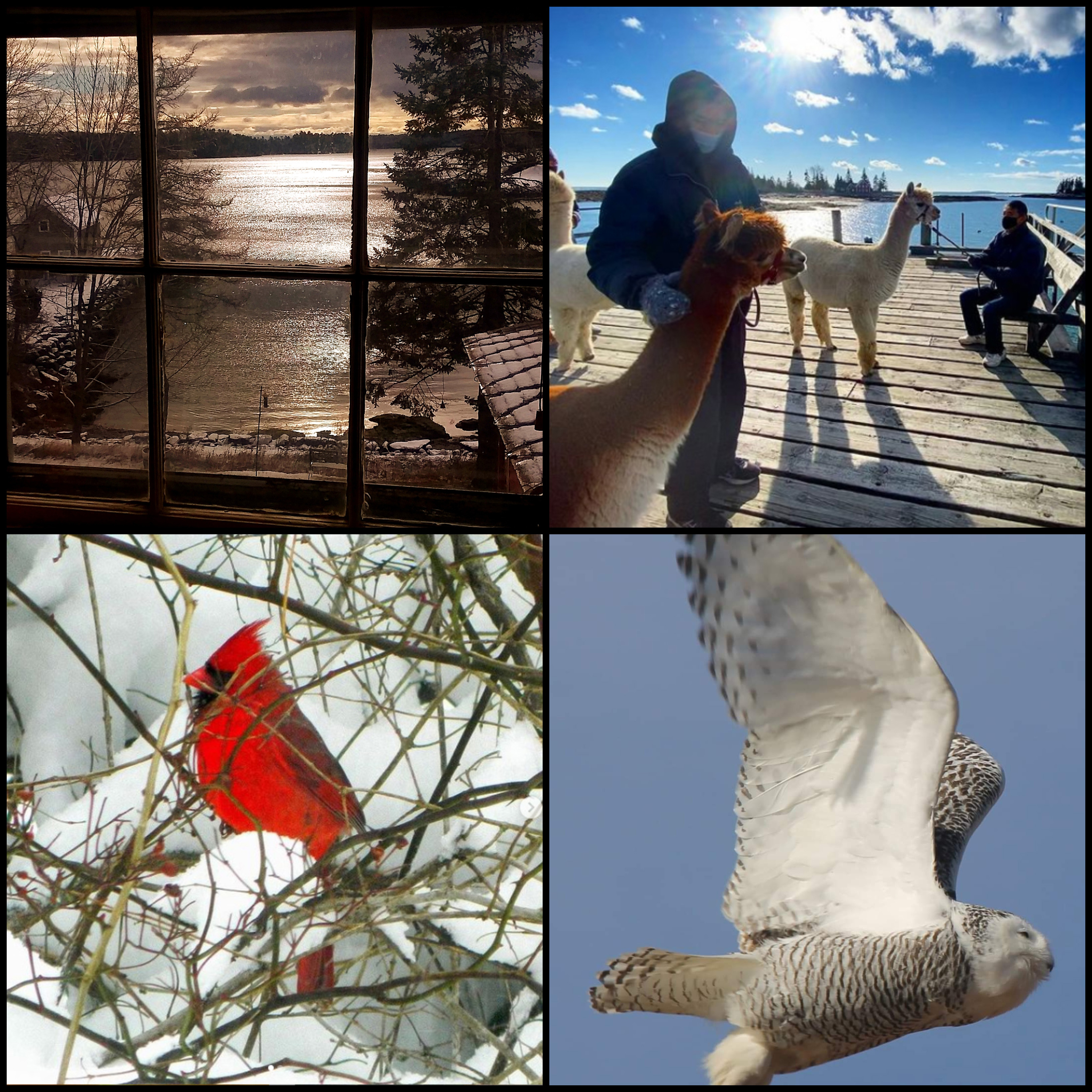 The four weekly winners of the February #LCNme365 photo contest. Voting for the monthly winner opened at noon, Wednesday, Feb. 17 and will close at 5 p.m., Monday, Feb. 22.
