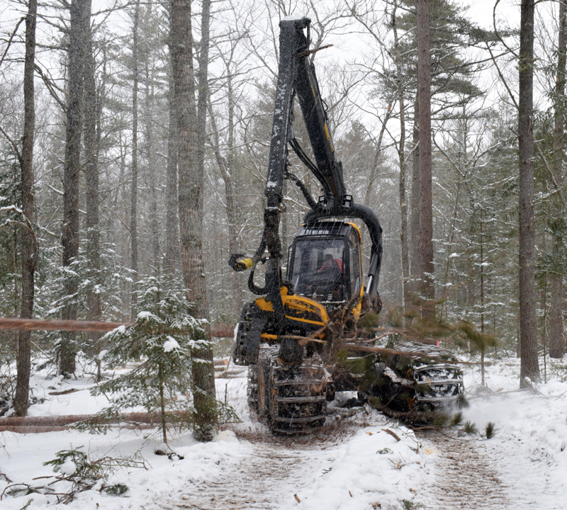 A processor harvests a tree at Dodge Point Public Reserved Land in Newcastle Tuesday, Feb. 10 as part of the ongoing timber harvest there. The parking lot and all trails on the east side of River Road will be closed for 3-6 weeks for the timber harvest. (Evan Houk photo)