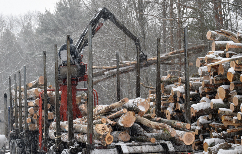 A machine loads harvested wood onto a truck at Dodge Point Public Reserved Land in Newcastle during a tour of the operation Tuesday, Feb. 10. The parking lot and all trails on the east side of River Road will be closed for 3-6 weeks to complete the harvest. (Evan Houk photo)