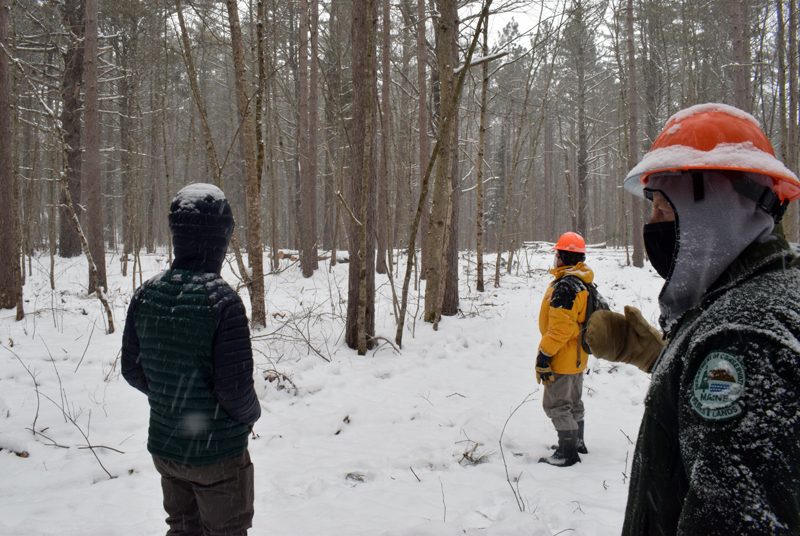 Stephen Richardson, senior forest engineer with the Maine Bureau of Parks and Lands (right), points out an area of forest at Dodge Point Public Reserved Land in Newcastle that has been selectively timber harvested during a tour of the operation on Tuesday, Feb 10. (Evan Houk photo)
