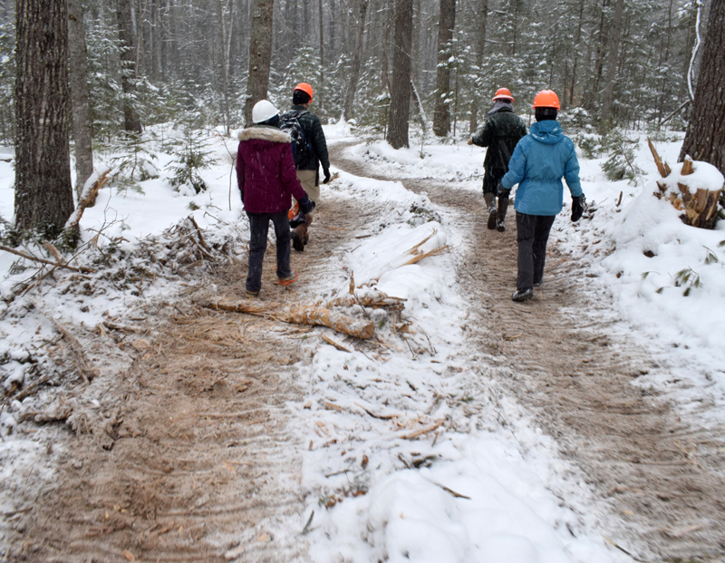People walk on a logging road during a tour of the timber harvest operation at Dodge Point Public Reserved Land in Newcastle Tuesday, Feb. 10. (Evan Houk photo)