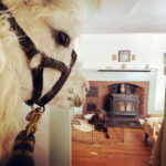FaceTime Fridays with Harry the Llama