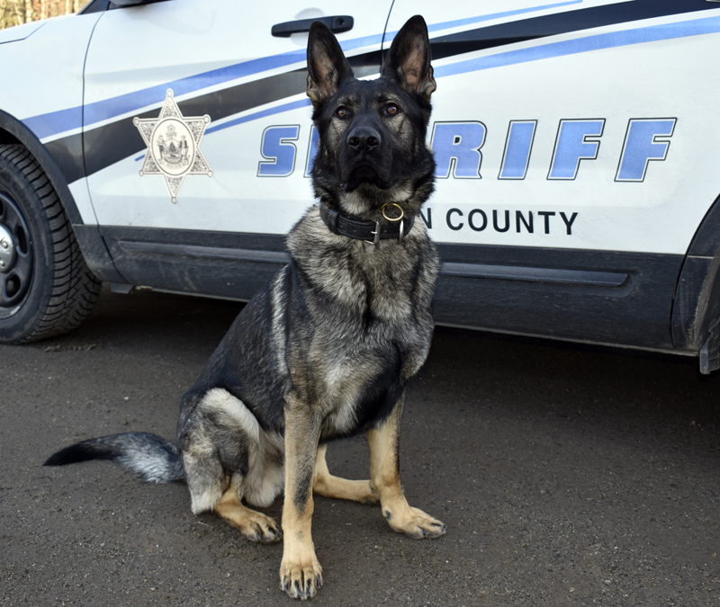 Bear, a Czech German shepherd, is the new K-9 on patrol for the Lincoln County Sheriff's Office. (J.W. Oliver photo)