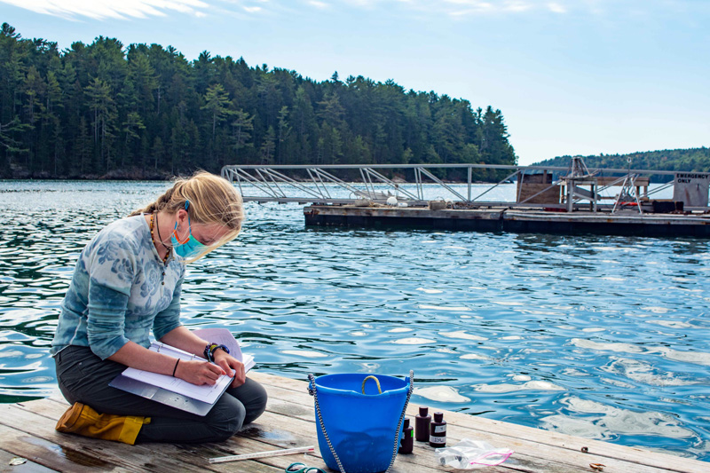 Darling Marine Center student researcher Essie Martin, of Newcastle, collects water samples at the center's pier in Lowes Cove. (Photo courtesy Darling Marine Center)