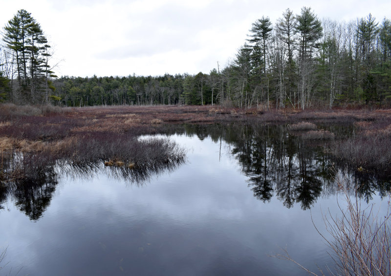 A view of a swamp off Back Meadow Road in Damariscotta. A man is believed to have entered the swamp on Saturday, April 3, leading to an approximately four-hour search. (Evan Houk photo)