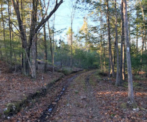 A woods road runs through the Dresden property where the nonprofit Good Ground Great Beyond aims to establish Maine's first site for open-air cremation. (Photo courtesy Angela Lutzenberger)