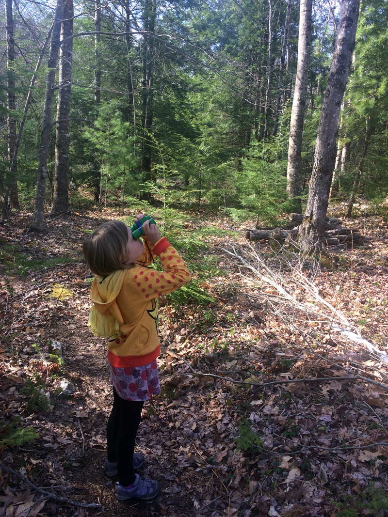A young birding enthusiast looks for feathered friends. (Photo courtesy Kennebec Estuary Land Trust)