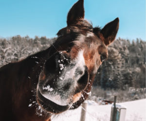 Taryn Crummett's photo of her horse Hotrod received the most reader votes to win the March #LCNme365 photo contest. Crummett will receive a $50 gift certificate to Coastal Car Wash and Detail Center, of Damariscotta and Boothbay Harbor, the sponsor of the March contest, and a canvas print of her photo courtesy of Mail It 4 U, of Newcastle.