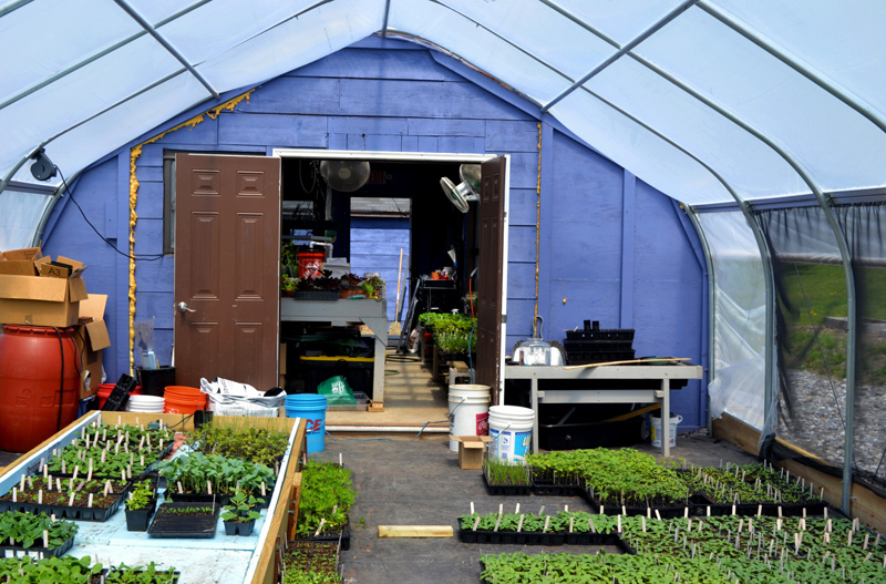 The recently installed hoop house has increased the space for seedlings at Whitefield Elementary School. (Nettie Hoagland photo)