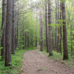Dodge Point Tour to Focus on Forest Management