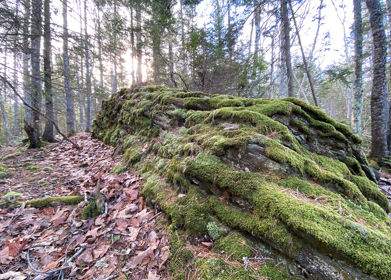 A moss-covered rock formation at the Capt. Robert Spear Preserve in South Bristol.