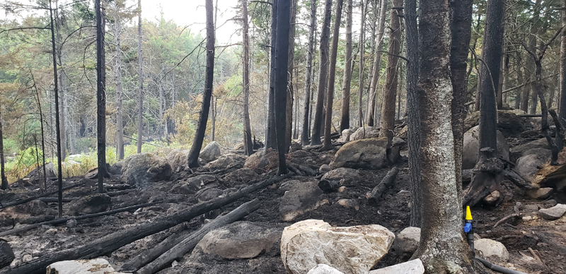 A woods fire that started on Sunday, June 13 burned more than six acres in the area of 1151 Wagner Bridge Road in Waldoboro. (Submitted article)