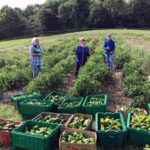 Online Event: 'Food Bank Farms and Gleaning'