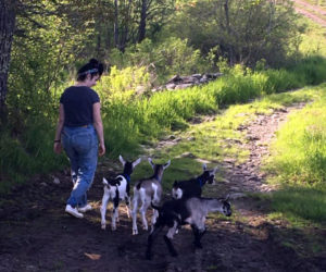 Pumpkin Vine Family Farm, of Somerville, invites the public to enjoy its trails with goat companions. (Photo courtesy Tammie Nelson)