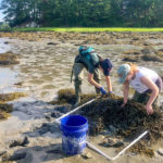 Marine Ecology Research Opportunity for HS Students
