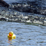 Duckies Anxious to Return to Sunday's Race