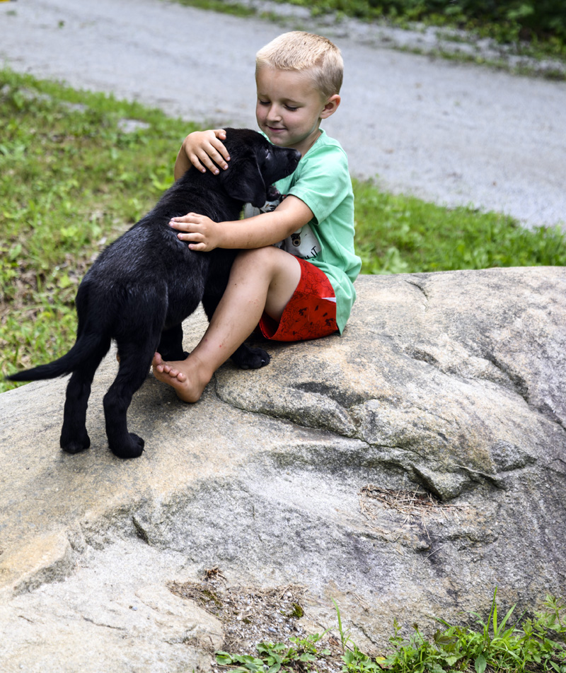 Sammy Genthner, 5, hugs puppy Haven in his yard in Jefferson on Friday, July 30. Haven and her brother Diesel made it home after going missing overnight. (Bisi Cameron Yee photo)