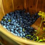 The Hills of Waldoboro are Paved with Blueberries
