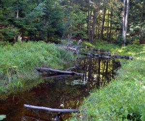 Castner Creek. (Paula Roberts photo)