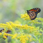 'Pollinator Palooza' Program at Coastal Rivers Salt Bay Farm