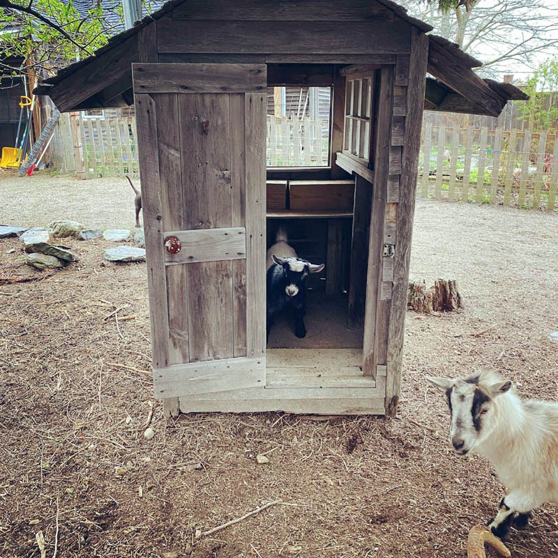 Pickles scheming in her secret meeting house. (Photo courtesy Katherine Dunn)