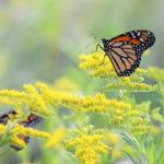 'Pollinator Palooza' at Coastal Rivers Salt Bay Farm